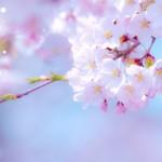 3月は桜の始まり。新しいことが始まる予感のピンクの弥生月