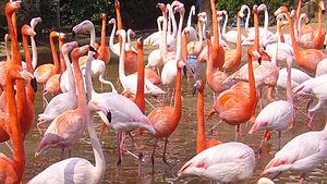 huramingo