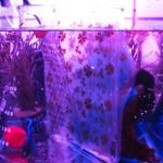 ピンクのプチアクアリウム(お魚入り)☆幻想的な癒し空間づくり