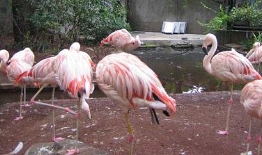 fla-pink